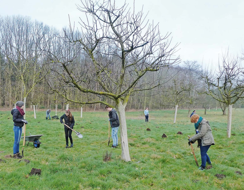 Anstrich für Obstbäume