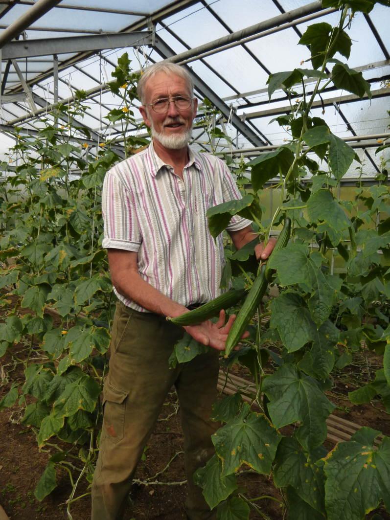 Gerhard Gross mit den wiederbelebten Gurken, die bis in den Oktober dankbar reiche Ernte brachten.