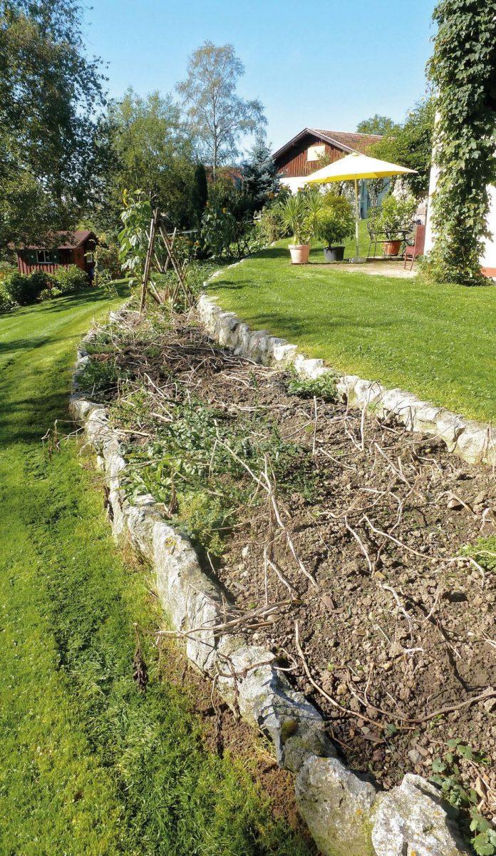 Gemüse gedeiht prächtig auf der sonnenbeschienenen Terrasse, die die abschüssige Wiese hinterm Haus in zwei Hälften teilt. Der EM und Bokashi-geflegte Boden erhält seit drei Jahren zusätzlich Pflanzenkohle.