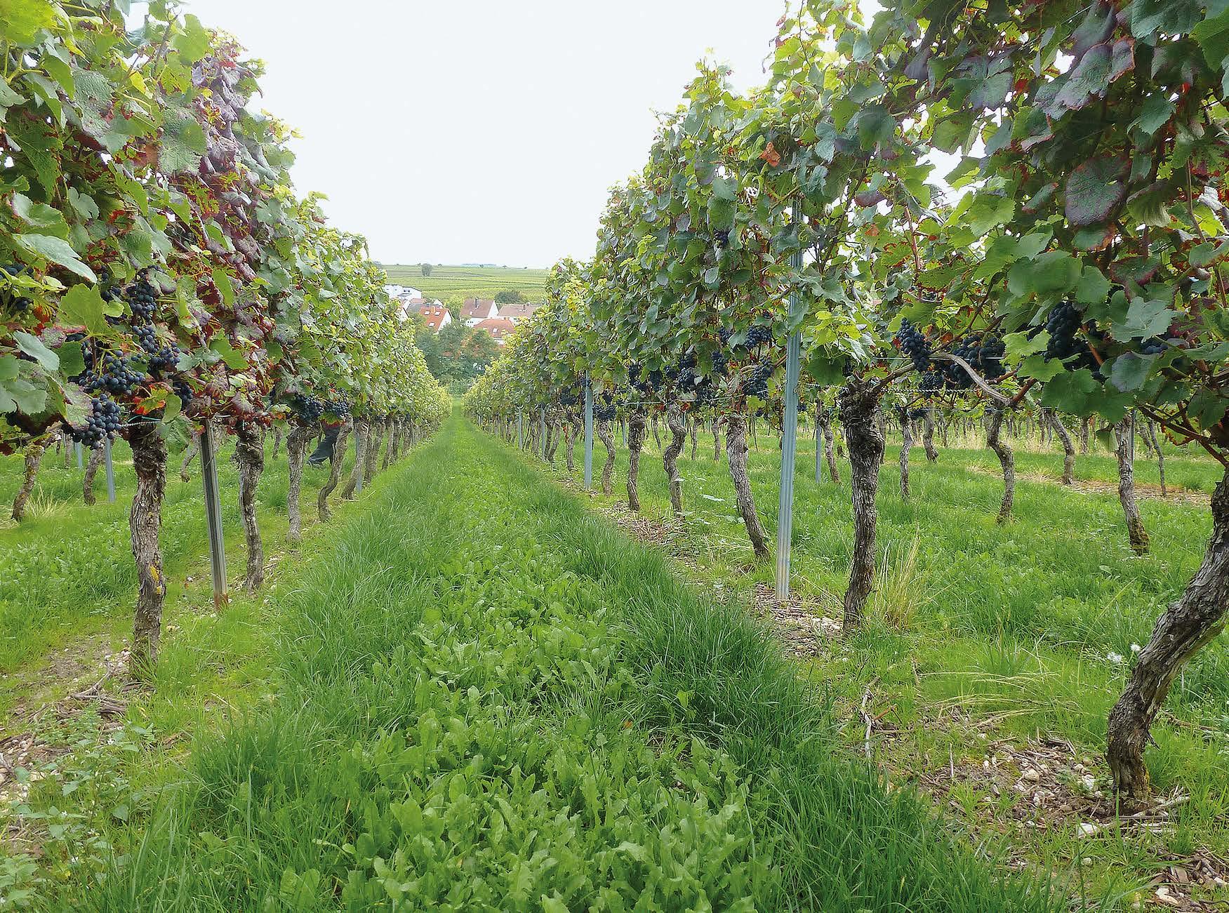 EM Weinbau