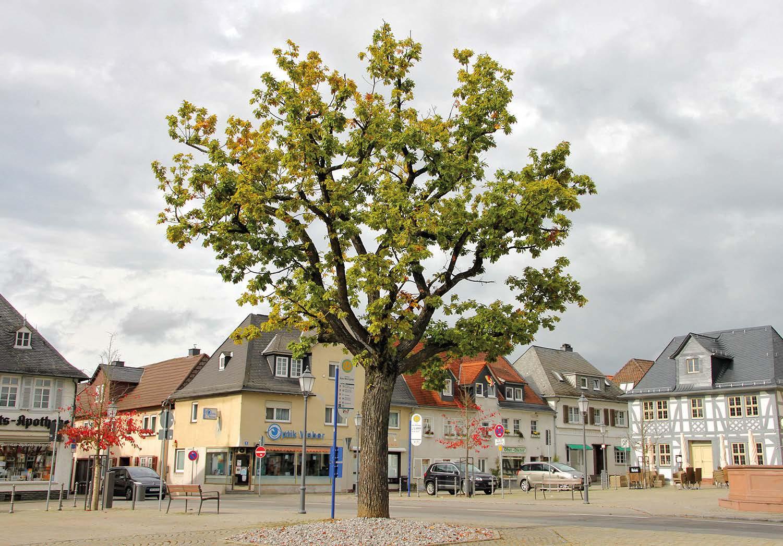 EM Baumpflege in der Stadt Usingen