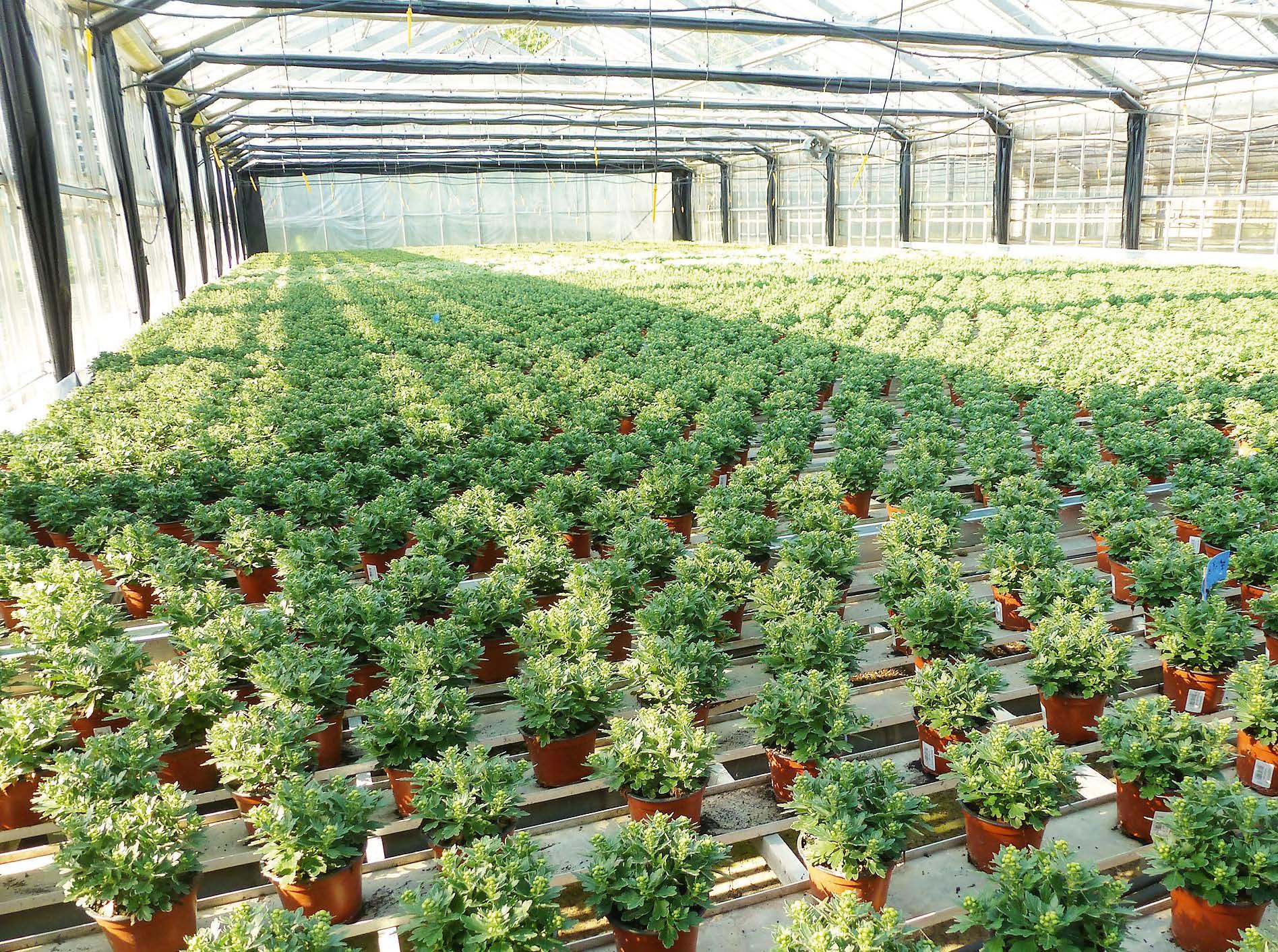 Jungpflanzen mit EM