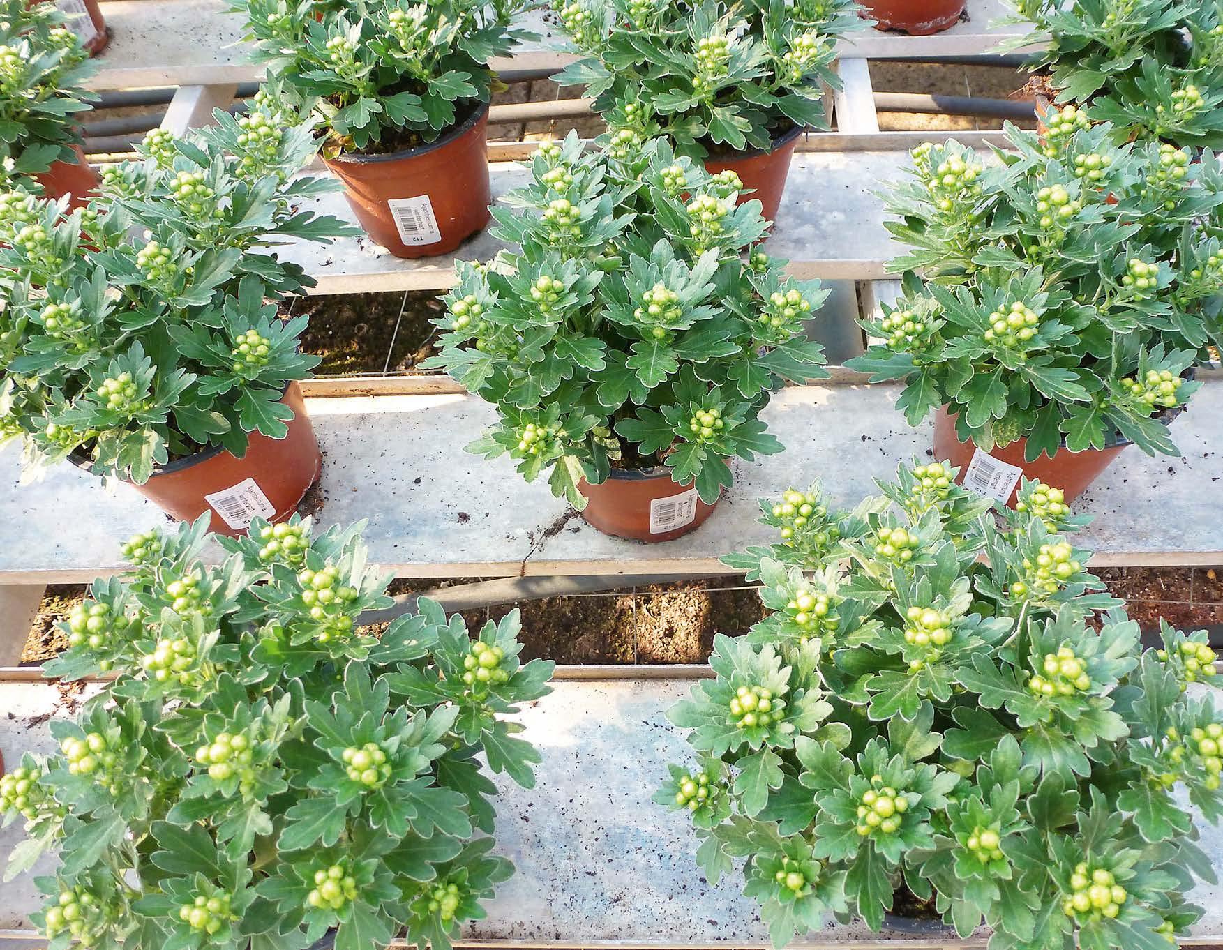 Topfpflanzen mit EM