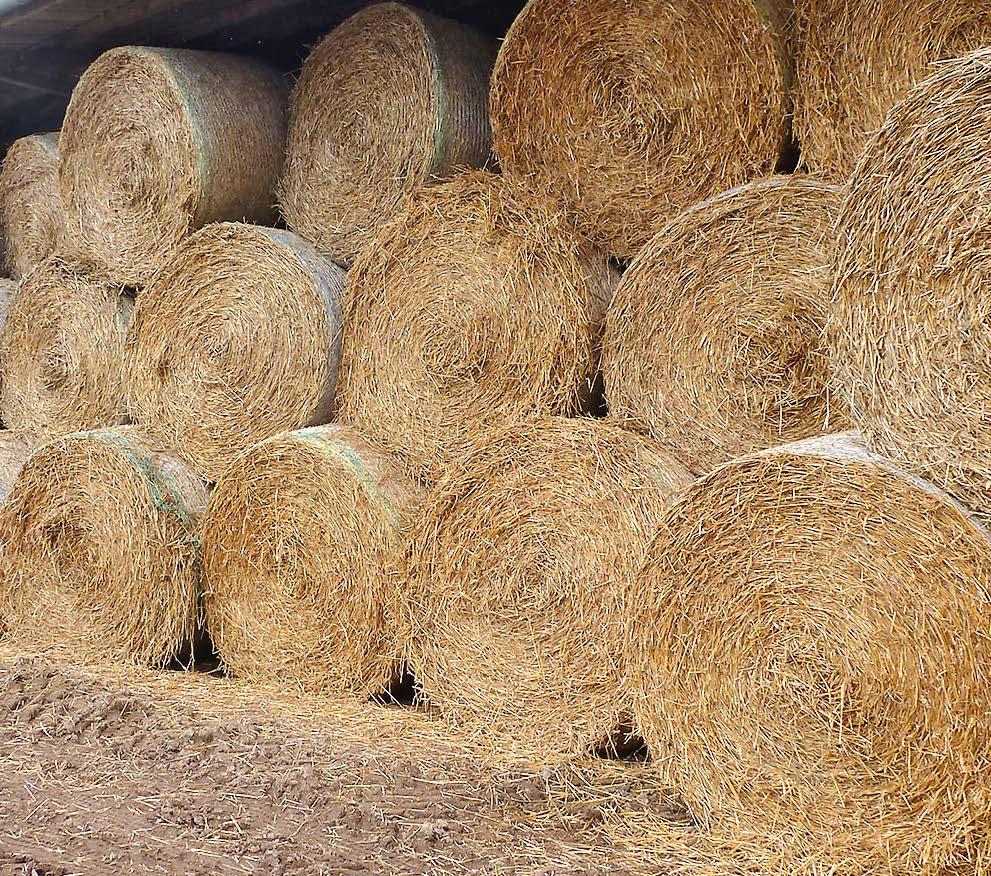 Für eine stetig saubere und gesunde Einstreu werden große Mengen Stroh gelagert.