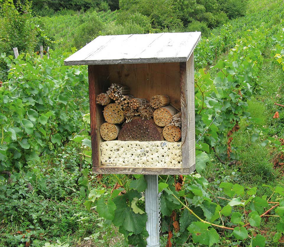 Insektenhotel im Weinberg
