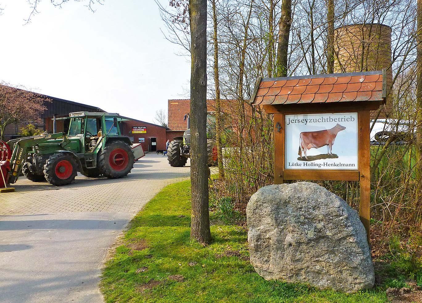 Ursprünglich kommt die Milchviehrasse Jersey, die hier gezüchtet wird, tatsächlich von der Kanalinsel Jersey.