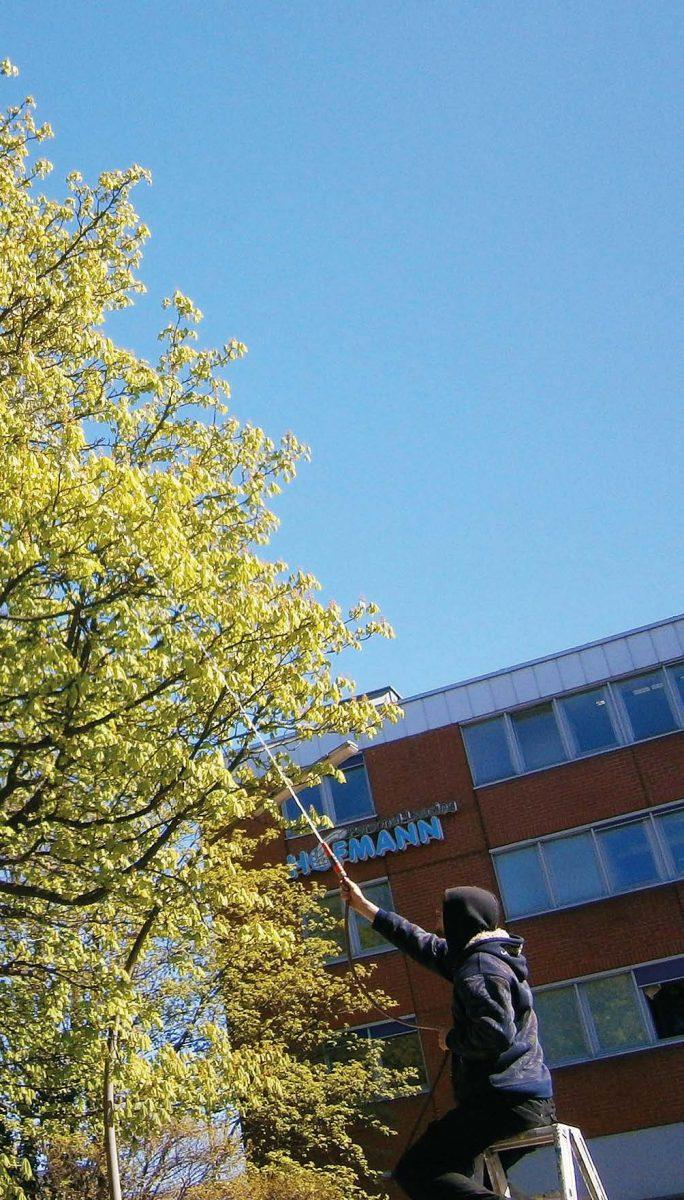 Besprühen der Kastanie von der Leiter