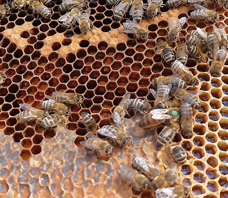 EM Bienen