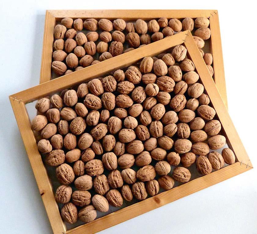 Die Nüsse auf den Sieben im Trockenschrank