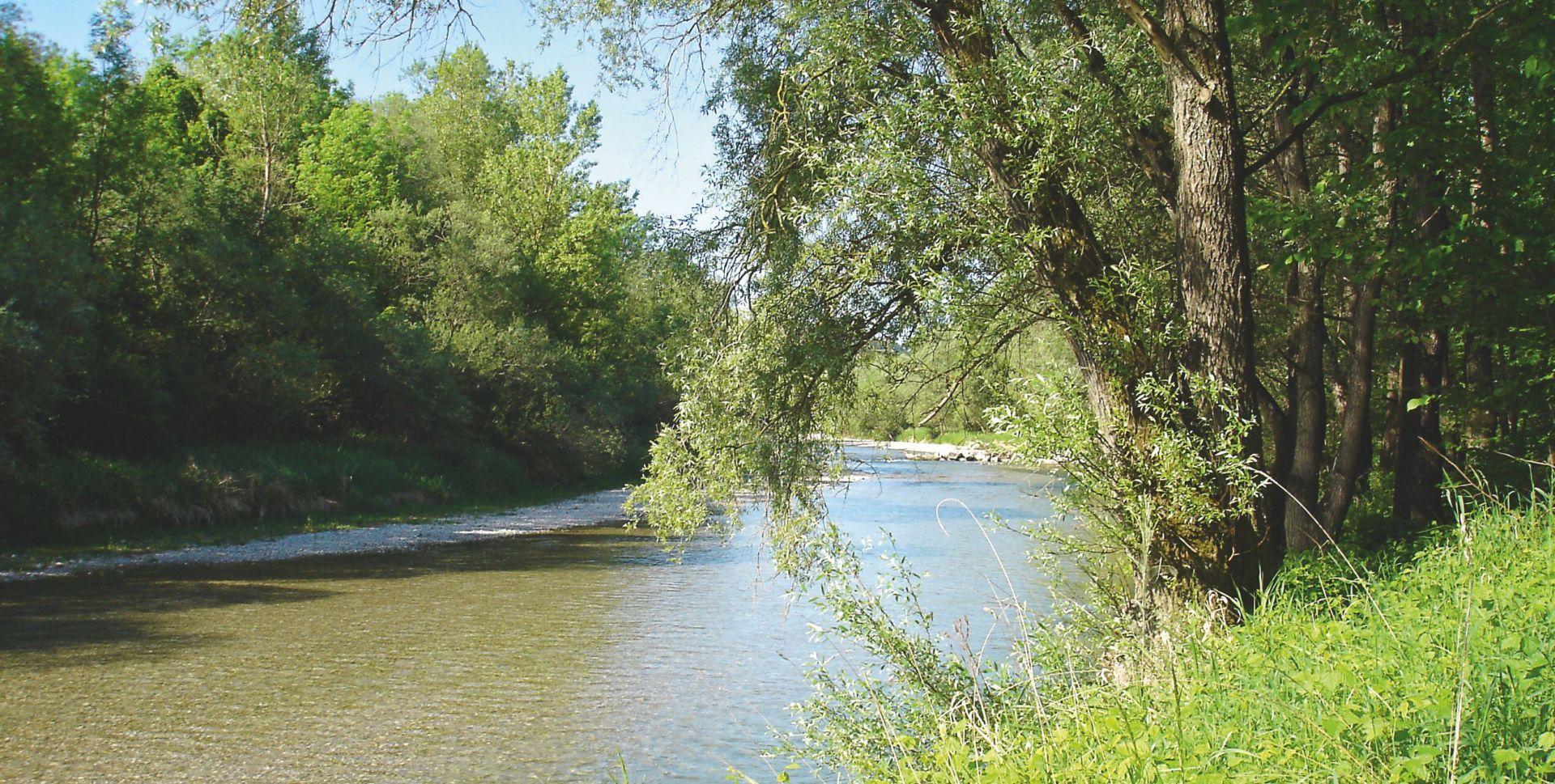 Ein idyllischer Fluss in seinem natürlichen Bett: die Alz