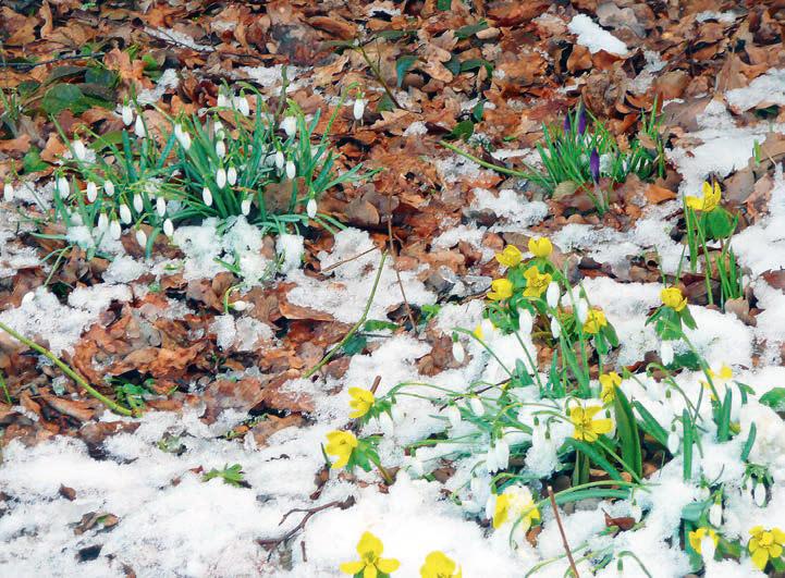 Blumen bei Frost