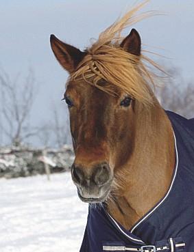EM-Pferd