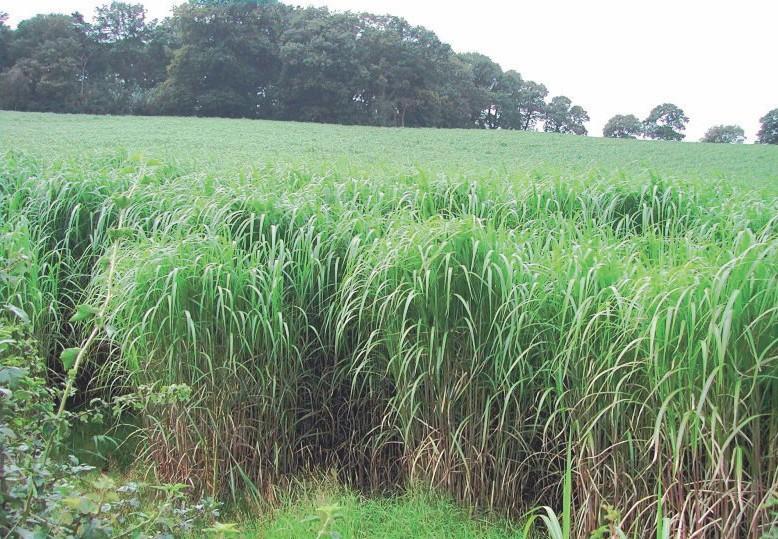 gewaltige Biomasse