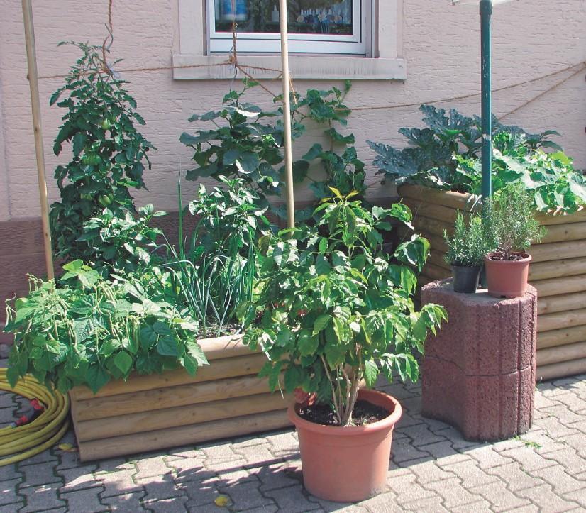 Wie ein kleiner Garten
