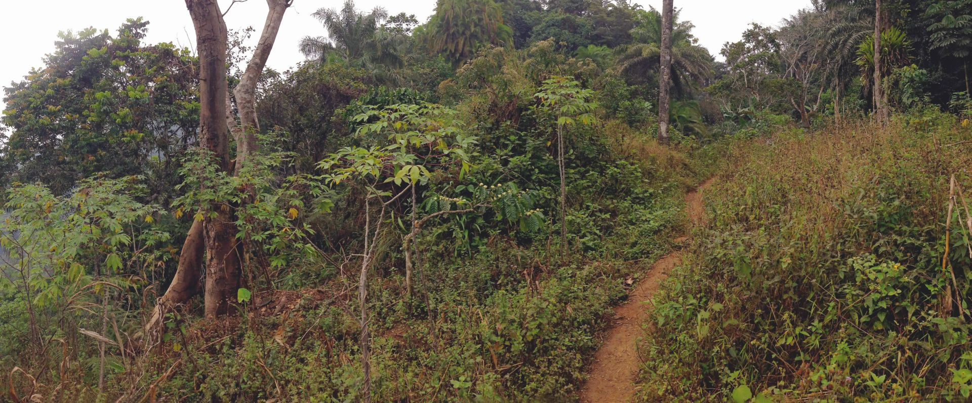Kamerun11