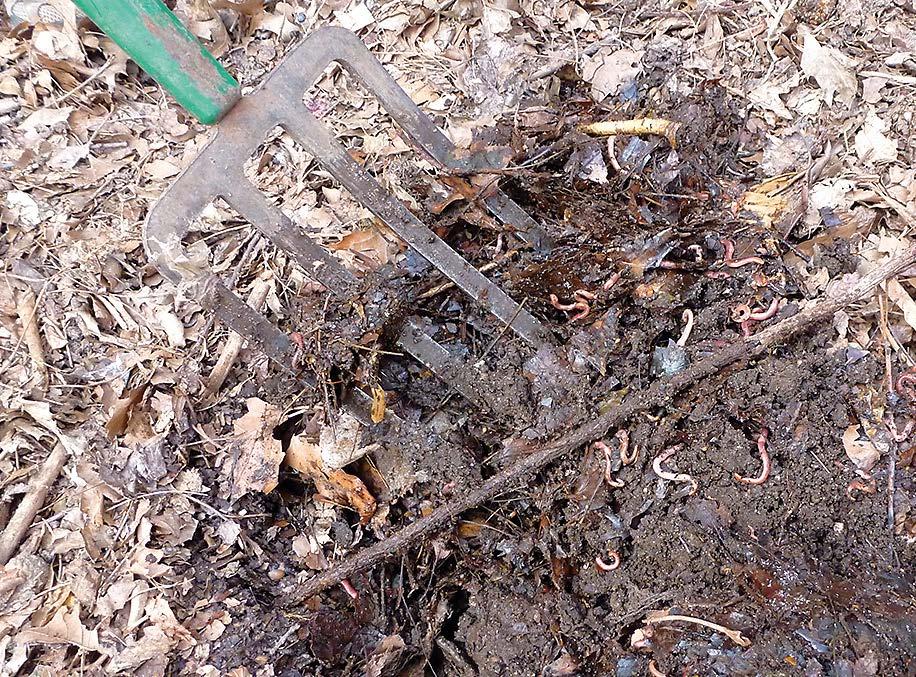 Selbst über den Winter haben die Würmer das Bokashi in Kompost verarbeitet.