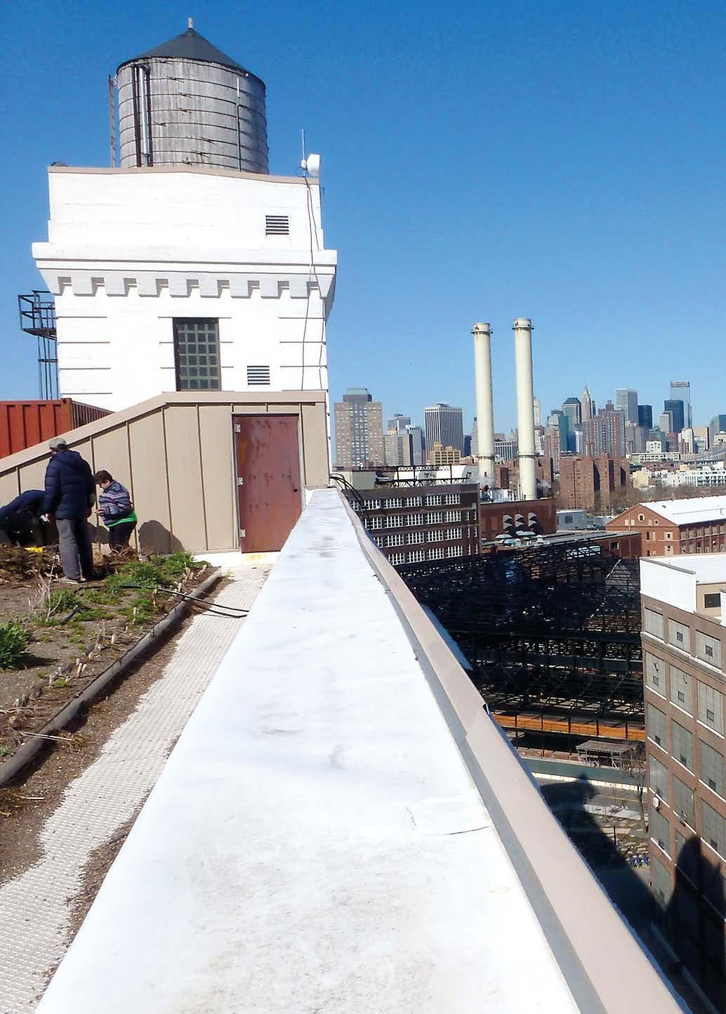10 Stockwerke über dem Hafen wird in Brooklyn urbane Landwirtschaft betrieben.