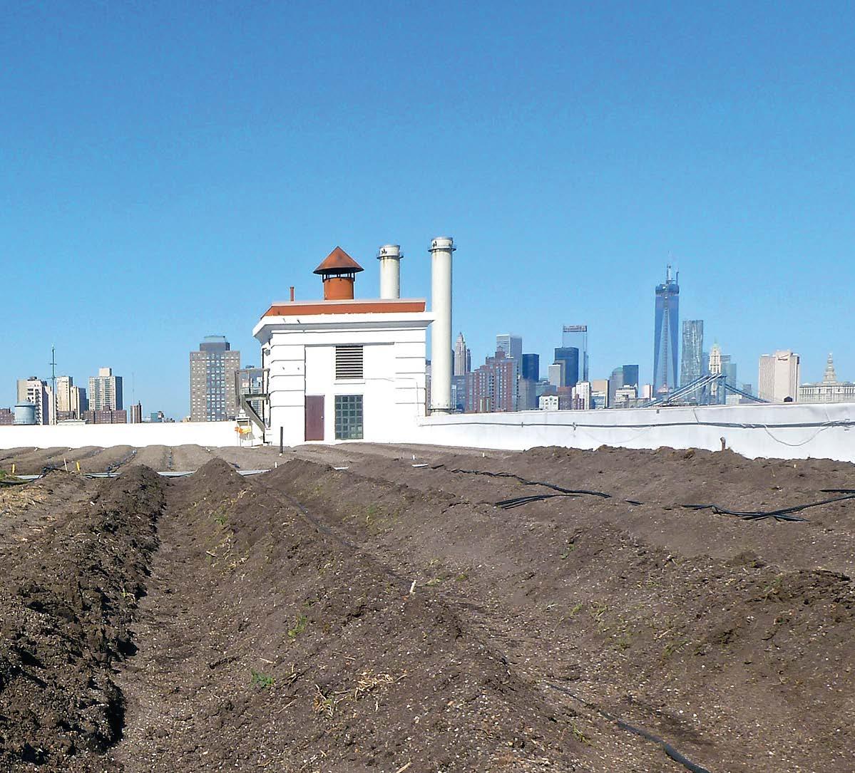 Produktion von Biogemüse mit Blick auf Manhattan.