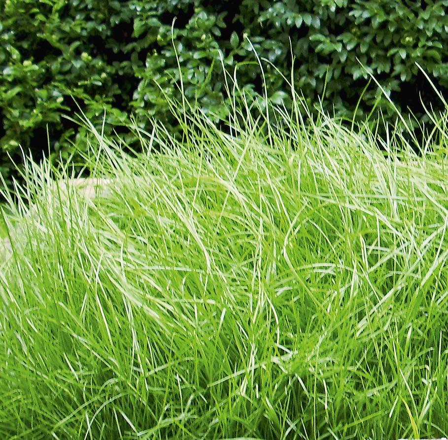Aus reinem Sand, gemischt mit Bokashi, wächst fettes Gras.