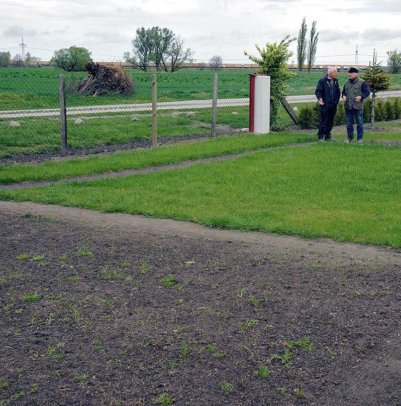 Die Rasenfläche wurde fünf Mal mit EMa gegossen; die dunkle Fläche links im Vordergrund wurde genauso mit Rasen eingesät, jedoch nicht behandelt. Der Unterschied ist unglaublich!
