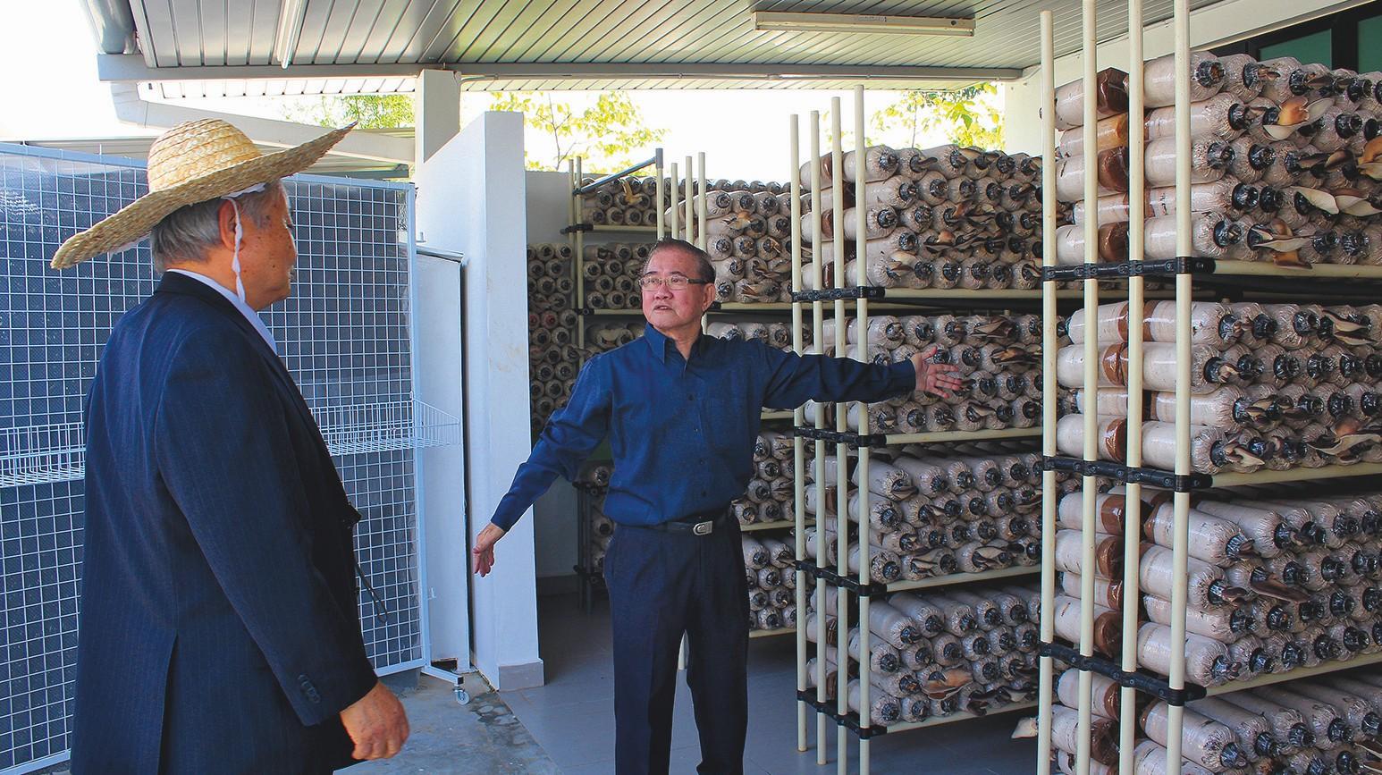 Im Erdgeschoss des Ausbildungszentrums für Menschen mit Behinderung werden Pilze gezüchtet. Der Einsatz von EM garantiert eine problemlose Zucht.