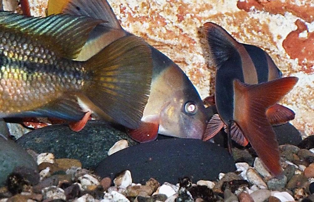EMversorgte Fische entwickeln eine leuchtende Farbigkeit.