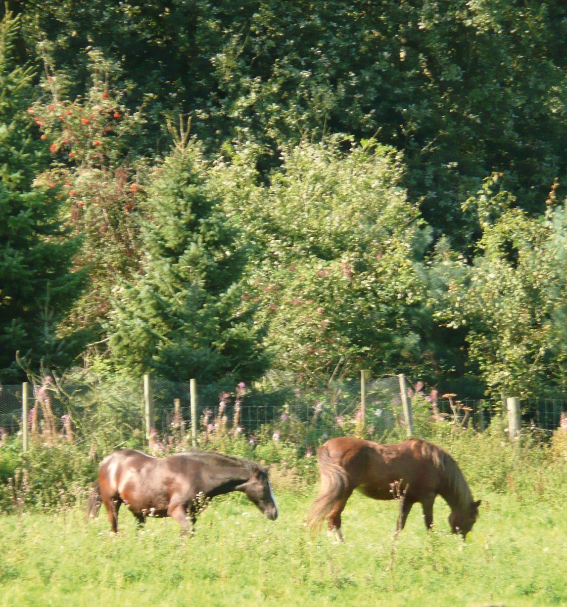 Die beiden Ponies vor zweieinhalb Jahren, links Louis, rechts Flicka