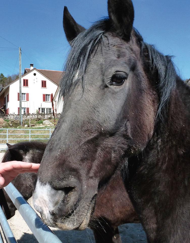 Weil ihr Pferd mit EM wieder gesund wurde, begann Carol Frei, die EMTechnologie in der Gärtnerei einzuführen.