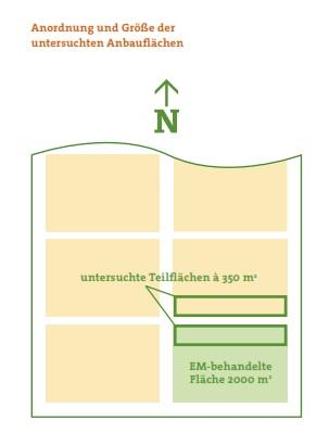 Anordnung und Größe der untersuchten Anbauflächen