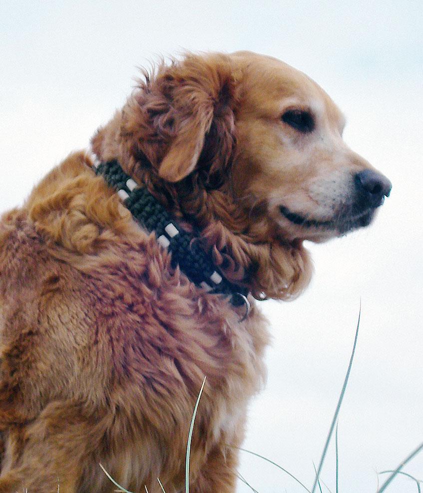 Hundehalsbänder mit eingewebten EM-Keramik-Pipes