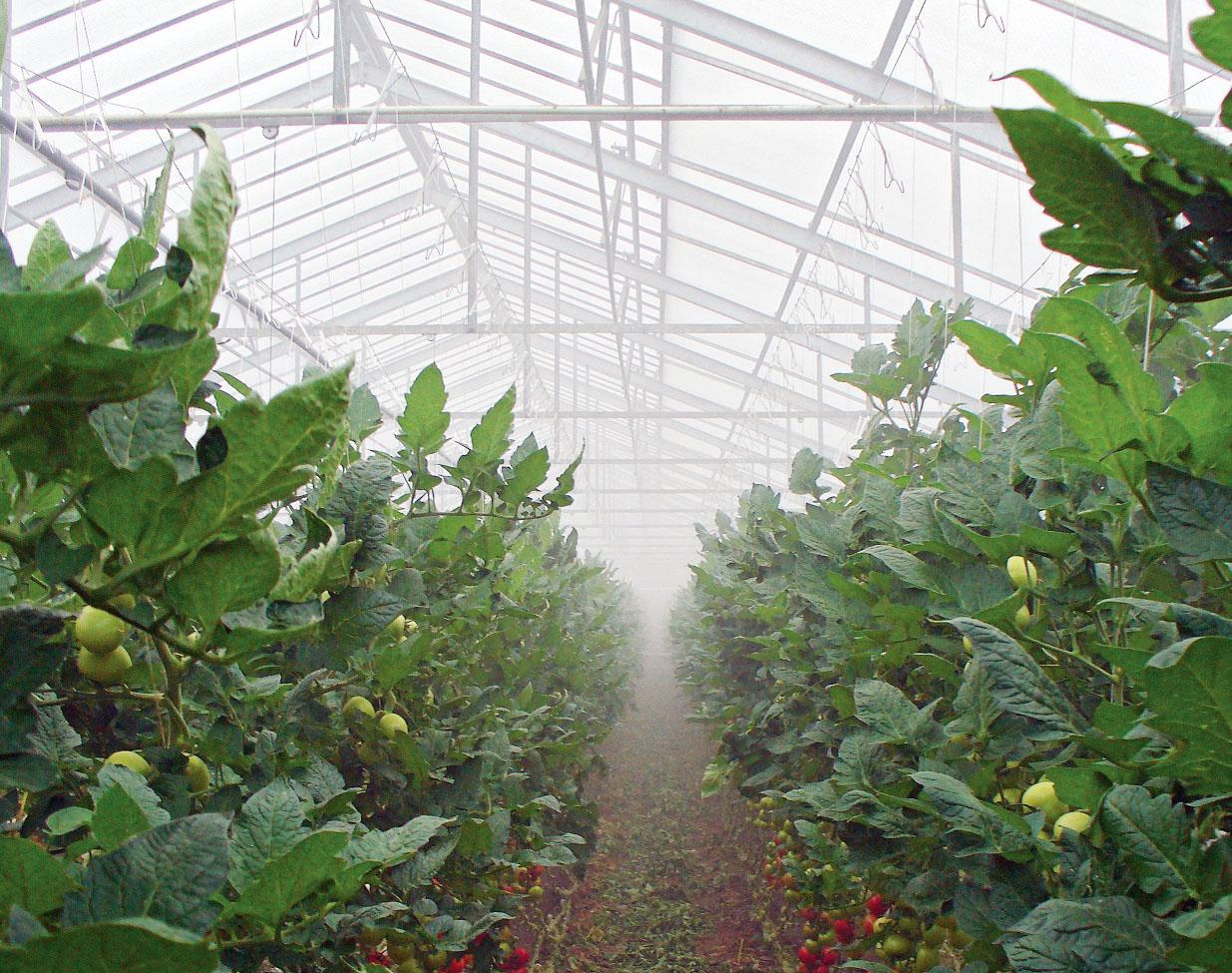 Je feiner EM mit oder ohne Zusätze vernebelt wird, desto besser für die Pflanzen.