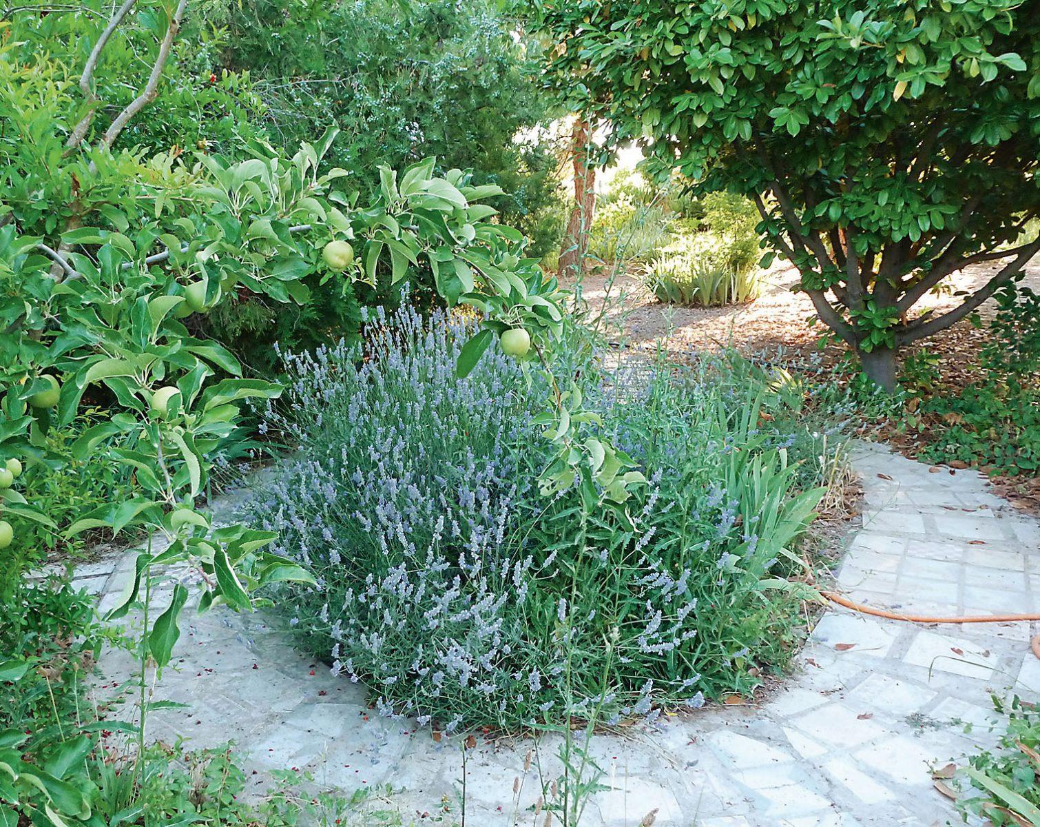 Kunstvolle Wege schaffen besondere Orte für eine bedachte Bepflanzung.