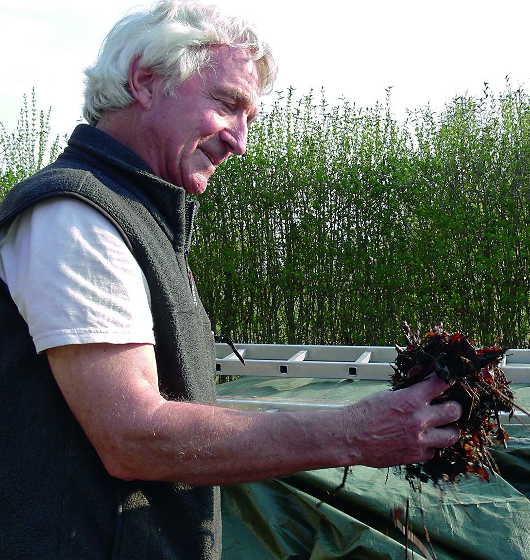 Hans Gugel prüft Bokashi aus geschredderten Kastanienblättern.