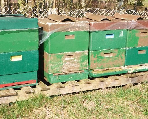 Bienenstöcke am Rand der Obstwiese