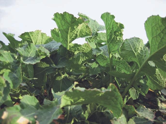 Gesunde Pflanzen und Blätter