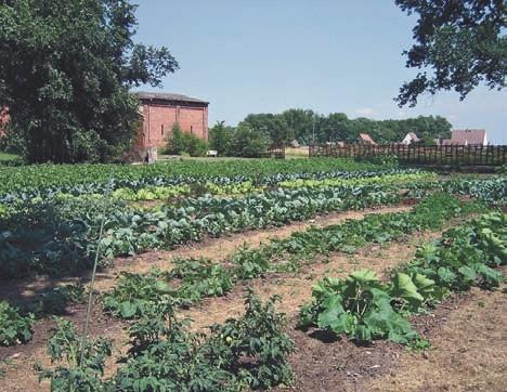 Die ersten Gemüsereihen nach der Rohdung
