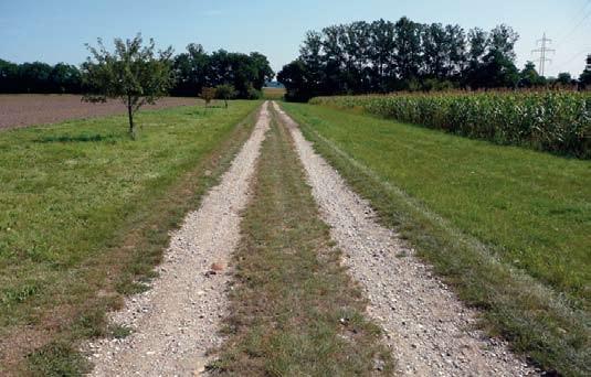 Breite naturbelassenen Streifen zwischen allen Feldern mit Obstbäumen