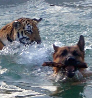 Spiel im Wasser: Die einjährige Shima hat Cliff in der Grösse längst überrundet.