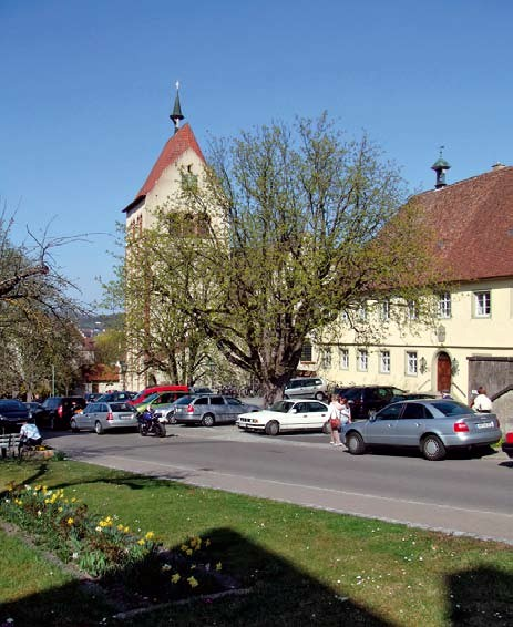 Die Kastanien vor dem Rathaus und dem Münster in Reinau
