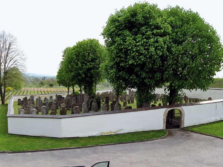 Der jüdische Friedhof in Ihringen am Kaiserstuhl mit den prächtigen Kastanien, die bisher regelmäßig von der Miniermotte geschädigt wurden.