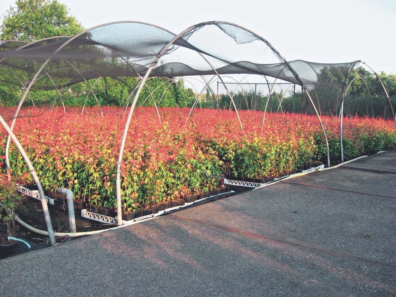 Verkaufsfertige Pflanzen