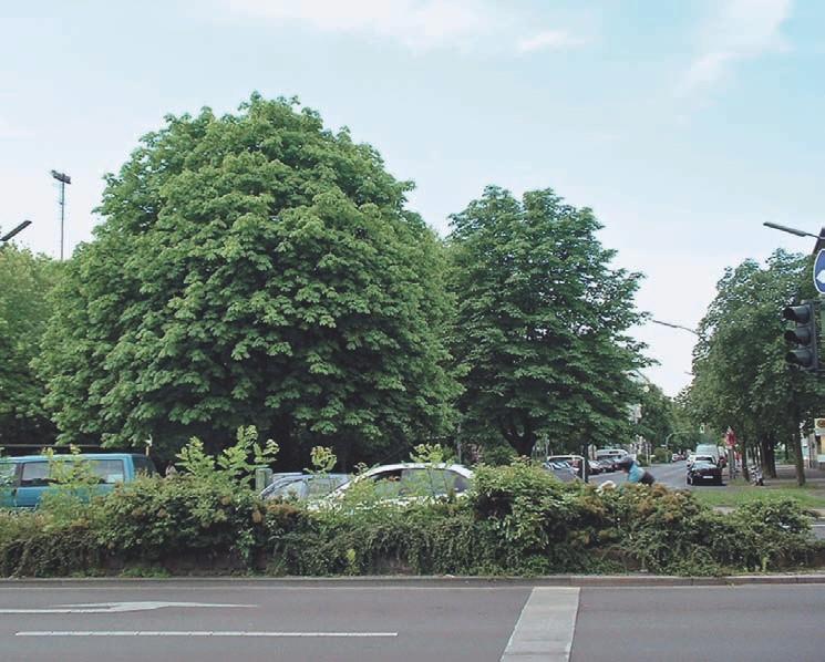Von Heike Hickel in Berlin-Kreuzberg gepflegte Kastanien.