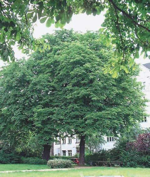 Die EM-gepflegten Bäume sind auffallend stabiler als andere.
