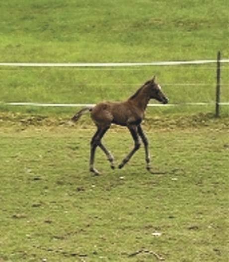Bokashi für Pferde