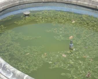Algen + trübes Wasser.
