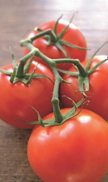 Knallrote, große und ausgezeichnet schmeckende Tomaten!