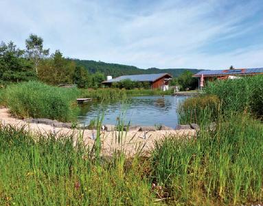 Etwa ein Drittel der Wasserfläche ist bewachsen, hier werden die organischen Stoffe aus dem Wasser gefiltert.
