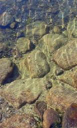 So klar kann das Wasser eines Naturschwimmbads im Sommer sein.