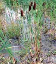Hier dürfen sich Algen sammeln und die Nährstoffe aus dem Wasser aufbrauchen, ebenso wie die unterschiedlichen Pflanzen.
