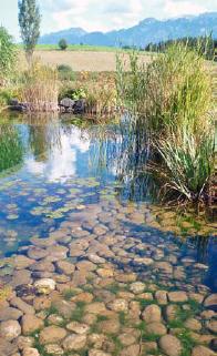 Im Pflanzenbereich sammeln sich die Algen